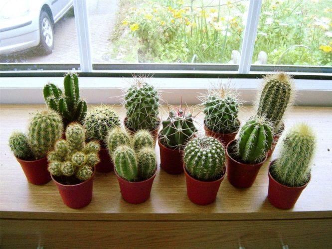 6 plantes d'intérieur pas chères et faciles d'entretien
