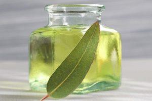 Huile essentielle d'eucalyptus : ce qu'il faut savoir