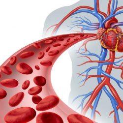 Mauvaise circulation du sang - Les signes qui doivent alerter