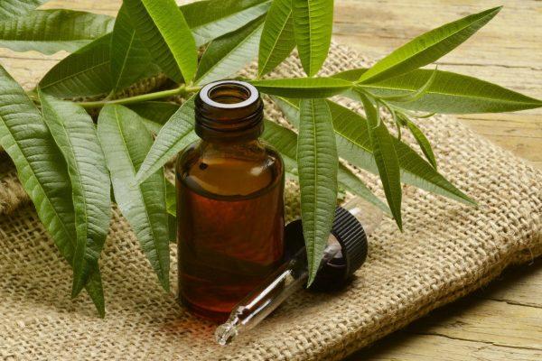 Les propriétés et bienfaits de l'huile essentielle de tea tree