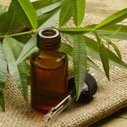 huile essentielle de tea tree - quels bienfaits
